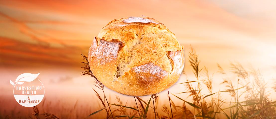 bread-hhh-size2x