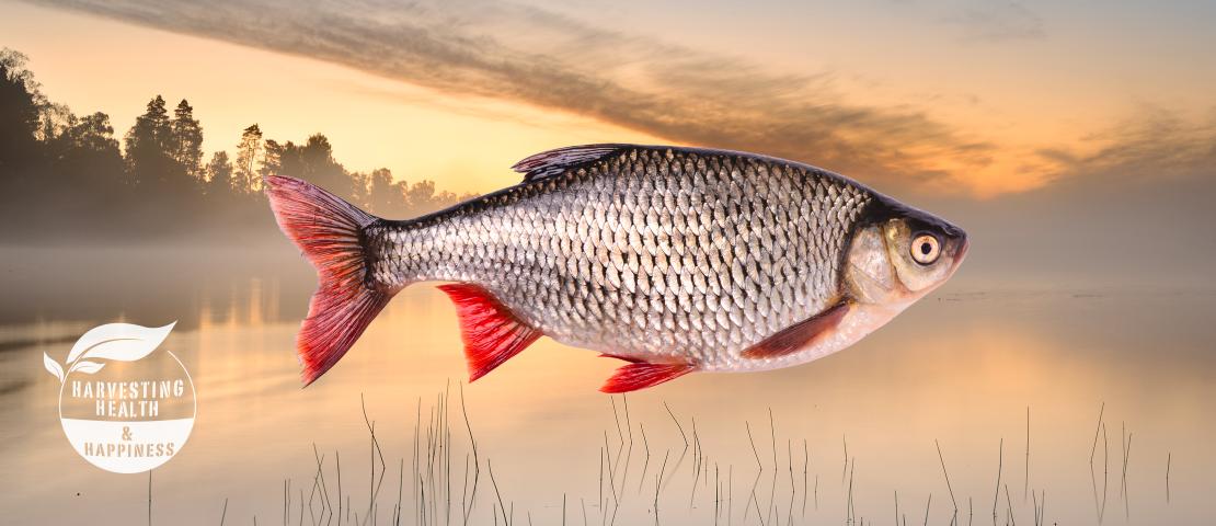 fish-hhh-size2x